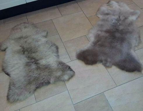 Twee grijze schapenvachten